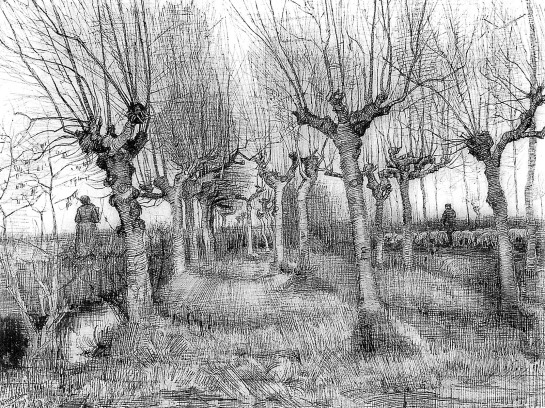 Vincent-Van-Gogh-Tree-drawings-2